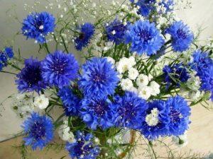 Картинки полевых цветов   красивые и увлекательные (2)