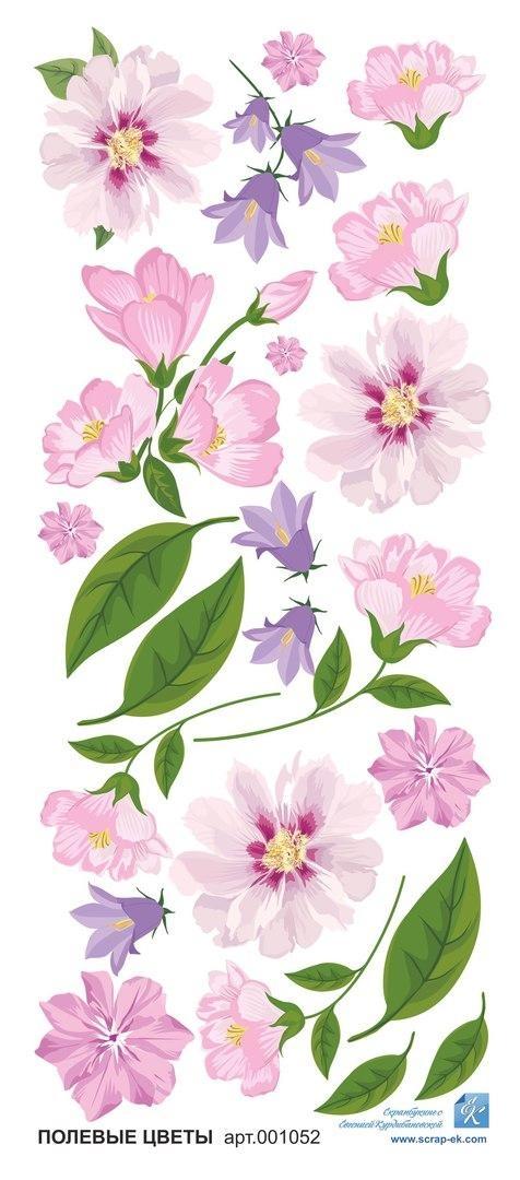 Картинки полевых цветов   красивые и увлекательные (21)