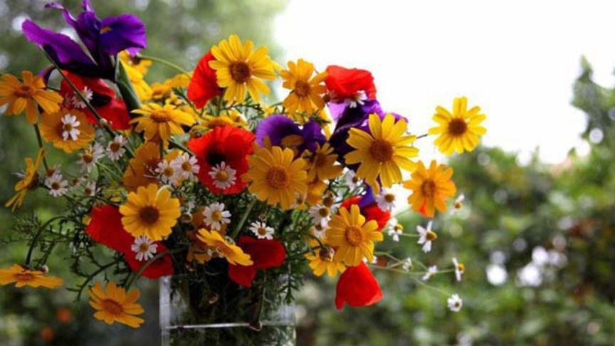 Картинки полевых цветов   красивые и увлекательные (23)