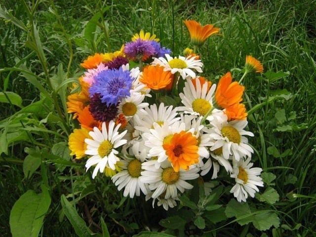 Картинки полевых цветов   красивые и увлекательные (5)