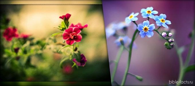 Картинки полевых цветов   красивые и увлекательные (8)