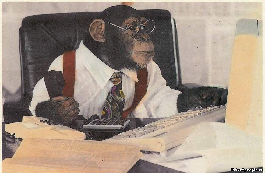 таком прикольная картинка обезьяна в офисе люблю тебя то