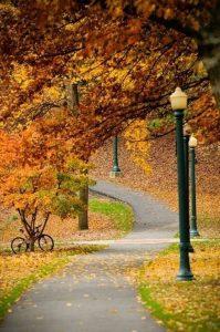 Картинки про красивую осень 022