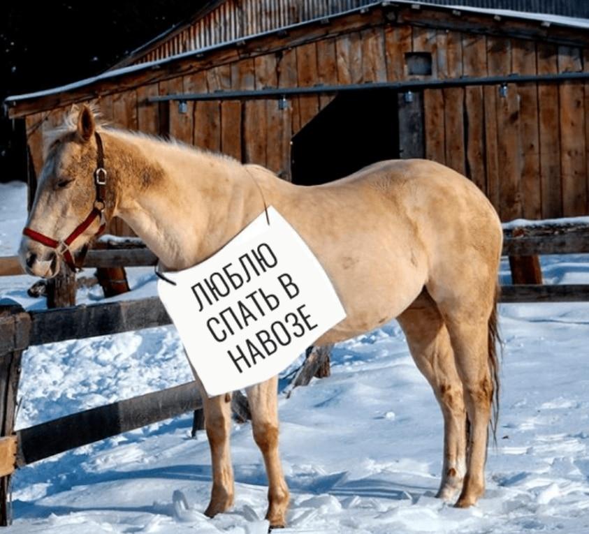Приколы про лошадь картинки