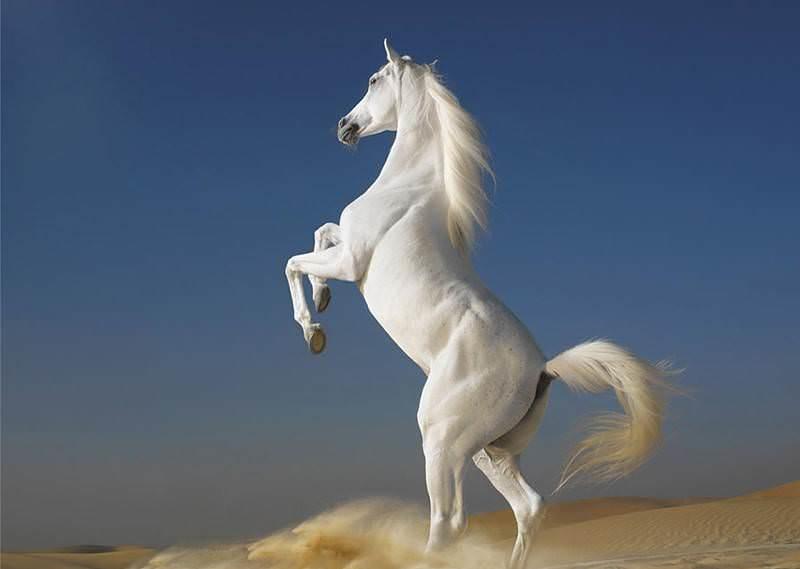 Картинки про лошадей с крыльями и рогом004
