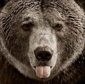Картинки про медведей смешные и веселые 023