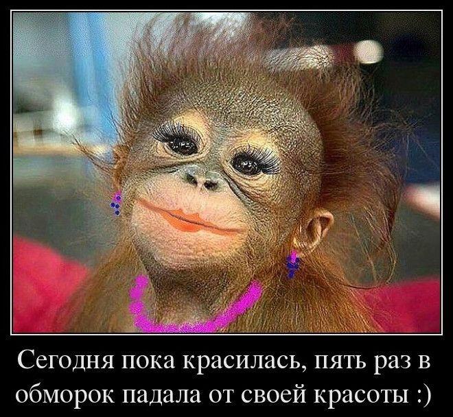 Картинки про обезьян прикольные и веселые 001