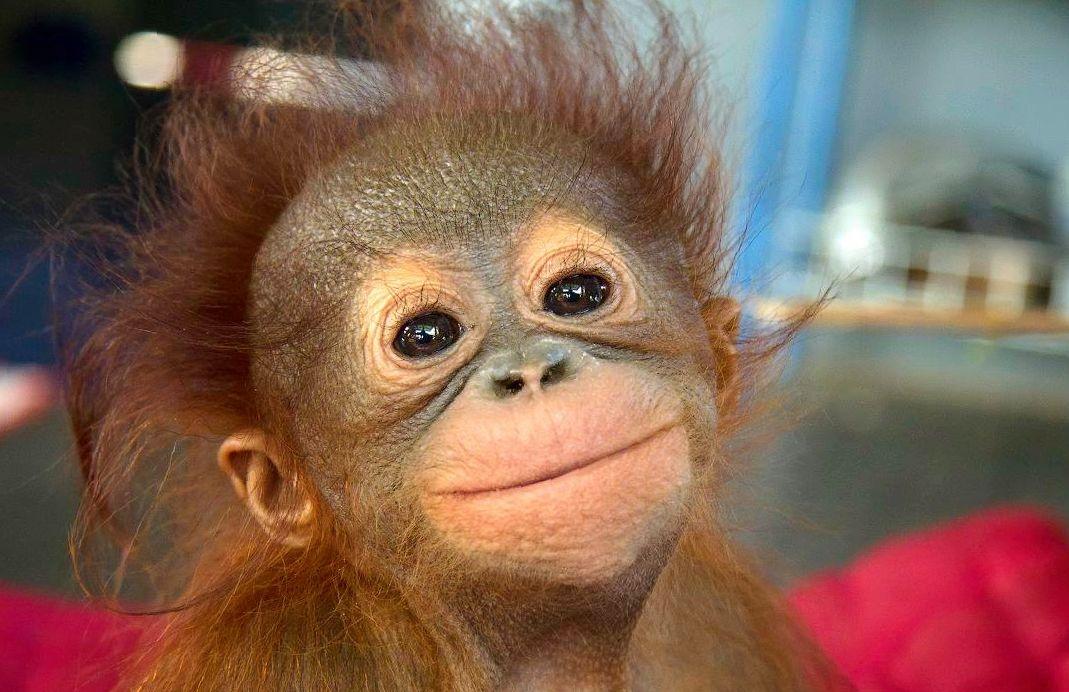 Картинки про обезьян прикольные и веселые 002