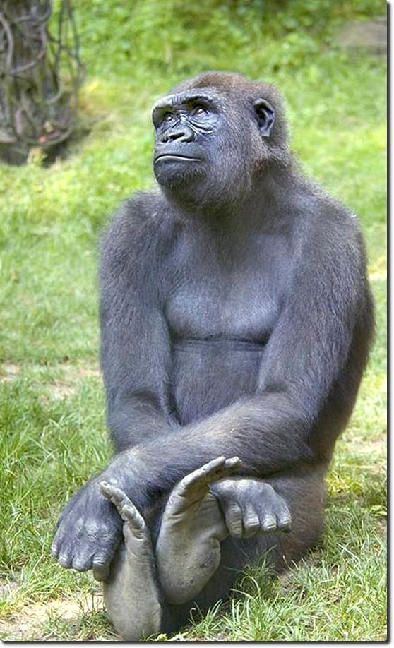 Картинки про обезьян прикольные и веселые 003
