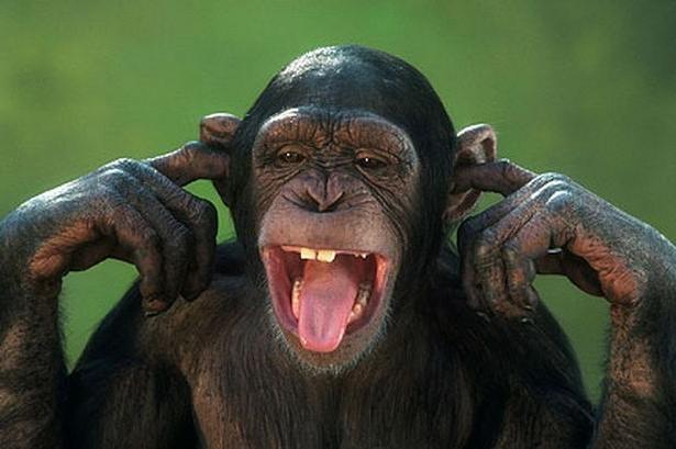 Картинки про обезьян прикольные и веселые 004