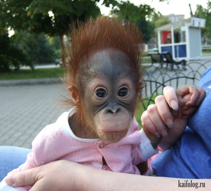 Картинки про обезьян прикольные и веселые 007