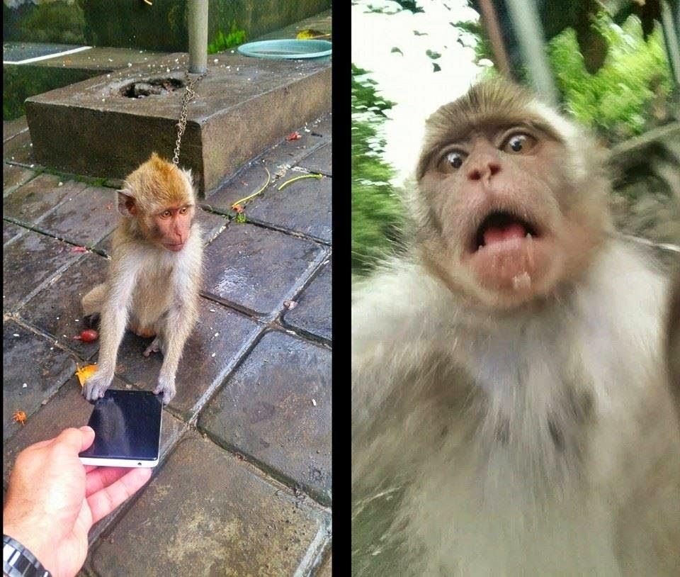 Картинки про обезьян прикольные и веселые 008