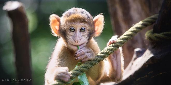 Картинки про обезьян прикольные и веселые 009