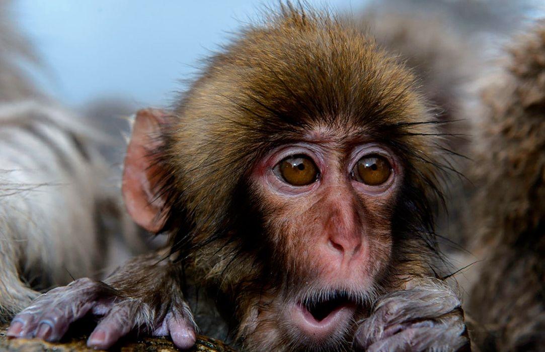 Картинки про обезьян прикольные и веселые 010