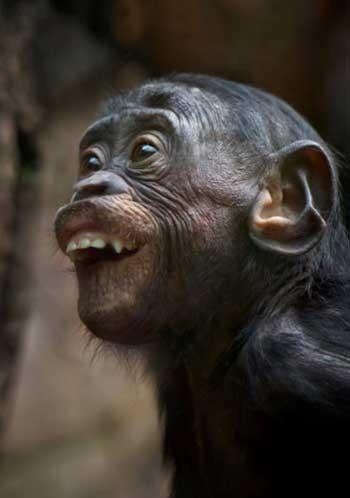 Картинки про обезьян прикольные и веселые 011