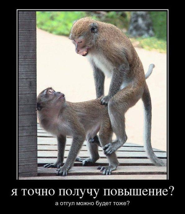 Картинки про обезьян прикольные и веселые 013