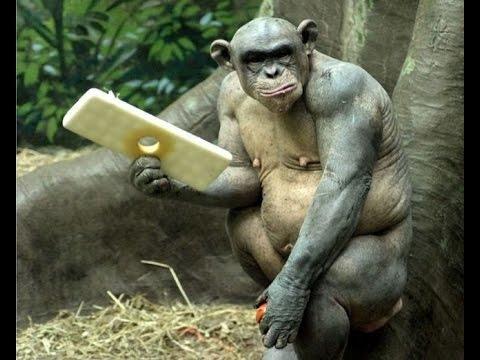 Картинки про обезьян прикольные и веселые 014