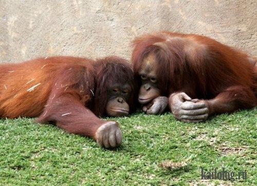 Картинки про обезьян прикольные и веселые 015