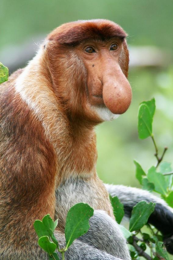 Картинки про обезьян прикольные и веселые 016