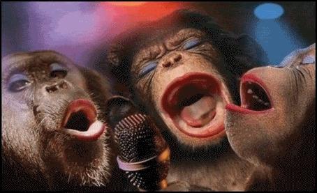 Картинки про обезьян прикольные и веселые 018
