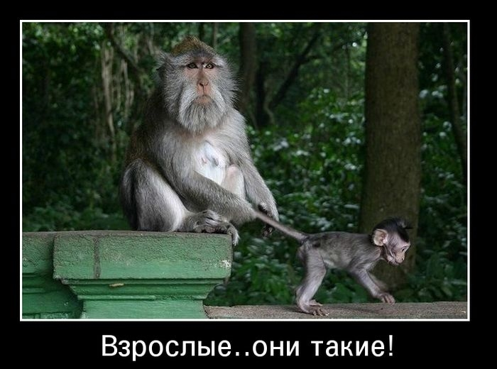 Картинки про обезьян прикольные и веселые 019