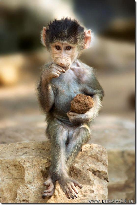 Картинки про обезьян прикольные и веселые 021