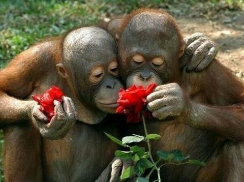 Картинки про обезьян прикольные и веселые 023