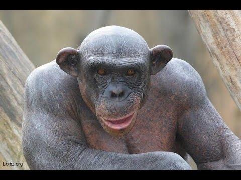 Картинки про обезьян прикольные и веселые 024