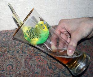 Картинки про попугаев смешные и веселые 021