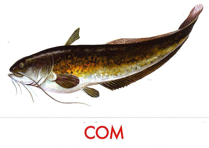 Картинки рыбки для детей для детского сада   подборка (42)