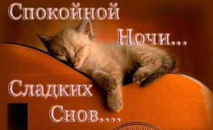 Картинки сладких снов котенок   милая подборка 024