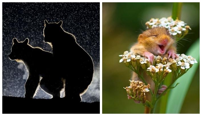 Картинки смешные про природу016