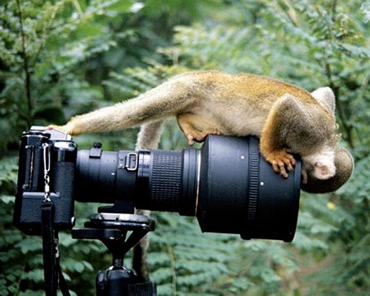 Картинки смешные про природу025
