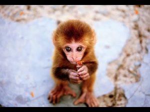 Картинки смешные с обезьянками   сборка фото 027