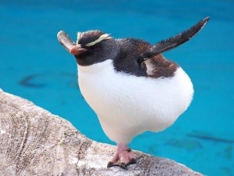 Картинки смешные с пингвинами 004