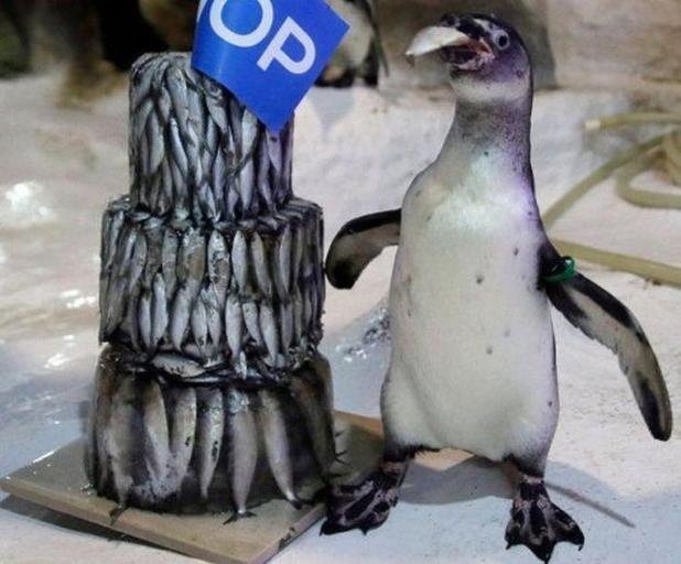 Картинки смешные с пингвинами 005