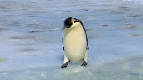 Картинки смешные с пингвинами 006