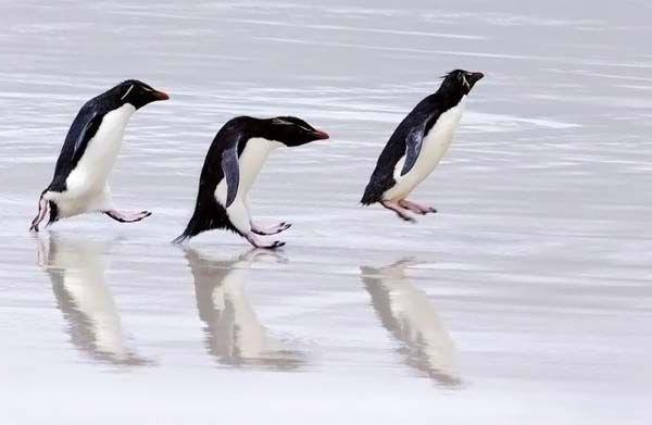 Картинки смешные с пингвинами 008
