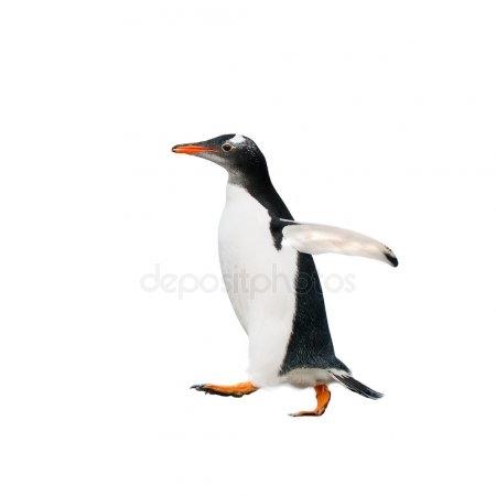 Картинки смешные с пингвинами 009
