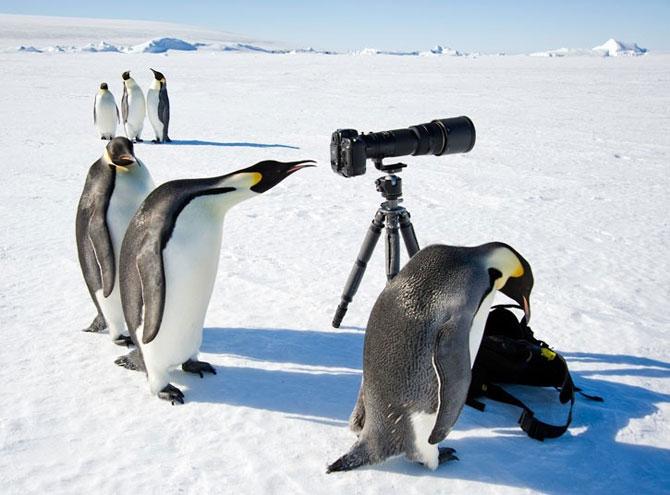 Картинки смешные с пингвинами 011