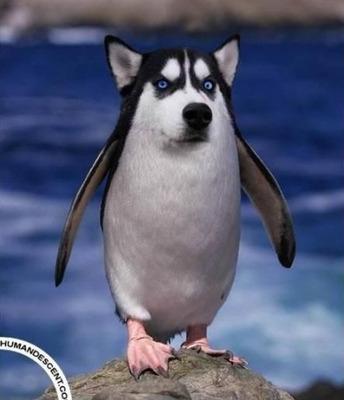 Картинки смешные с пингвинами 013