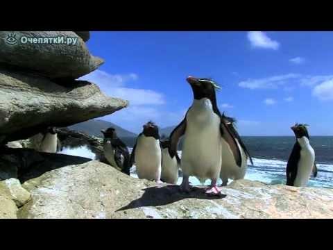 Картинки смешные с пингвинами 021