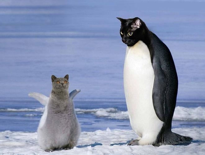 Картинки смешные с пингвинами 028