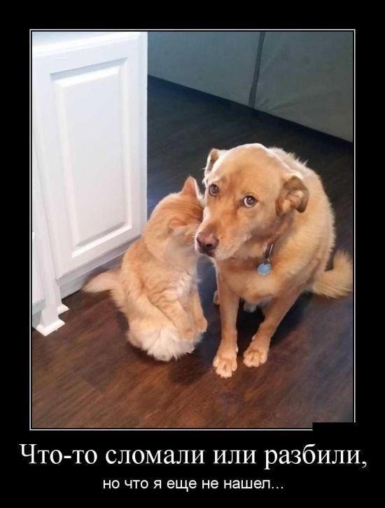 Картинки смешные с собачками   подборка фото (11)
