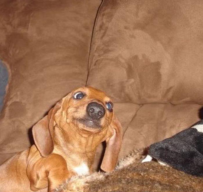 Картинки смешные с собачками   подборка фото (24)