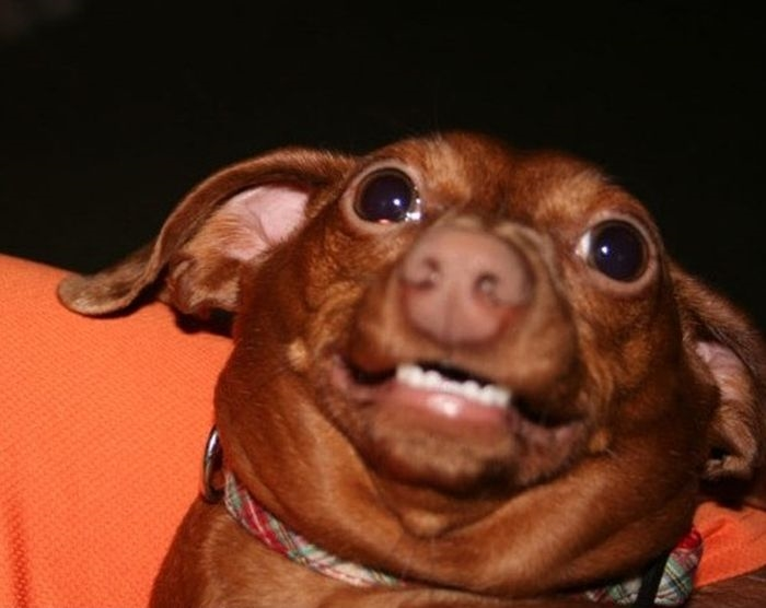 Картинки смешные с собачками   подборка фото (3)