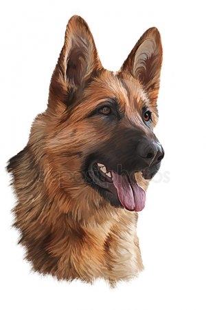 Картинки собака для детей нарисованные   картинки (14)