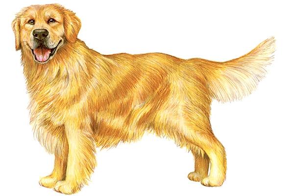 Картинки собака для детей нарисованные   картинки (16)