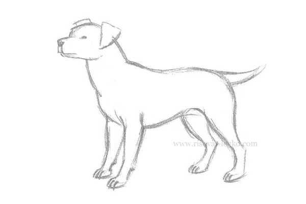 Картинки собака для детей нарисованные   картинки (17)