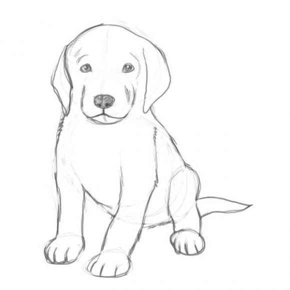 Картинки собака для детей нарисованные   картинки (2)